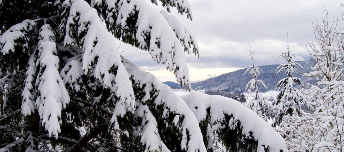 Decouverte Vosges Hiver
